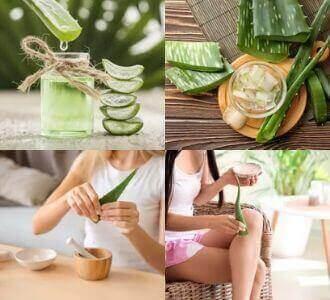 Aloe Vera ist eine natürliche Behandlung bei Hämorrhoiden